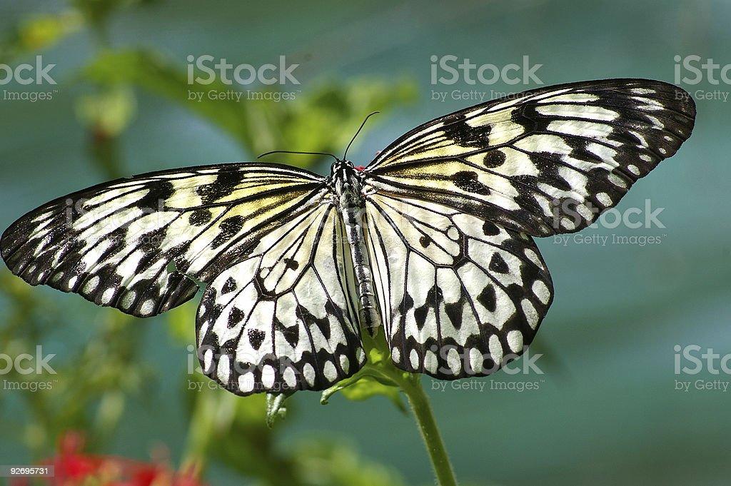 Schmetterling 2 Lizenzfreies stock-foto