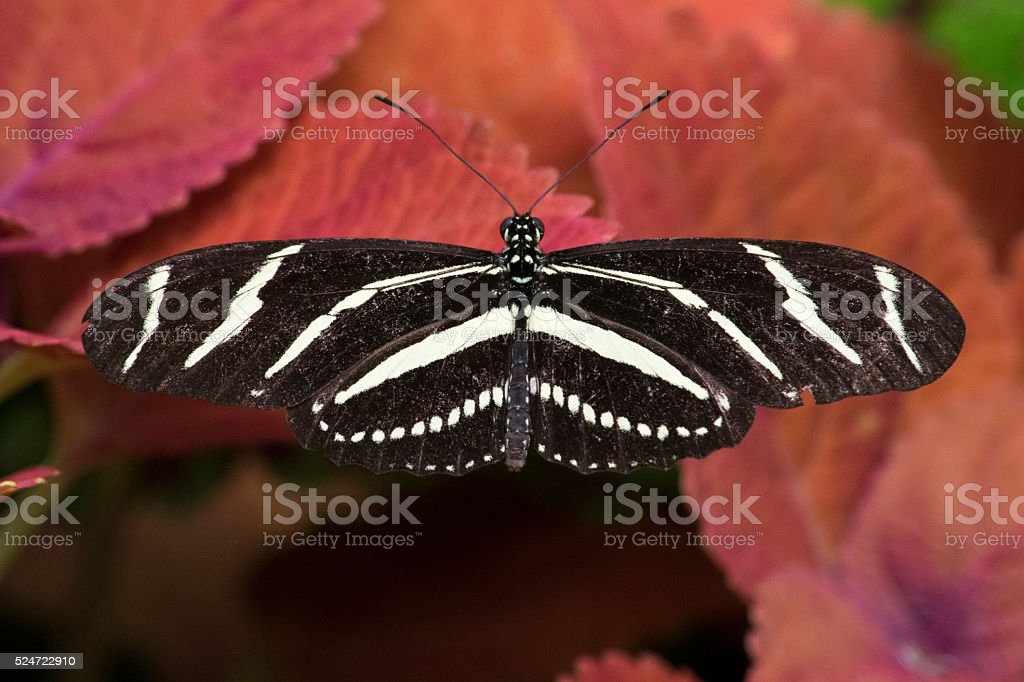 Butterfly 2016-19 stock photo