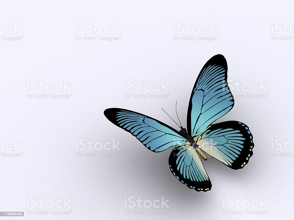 Butterfly 3 stock photo