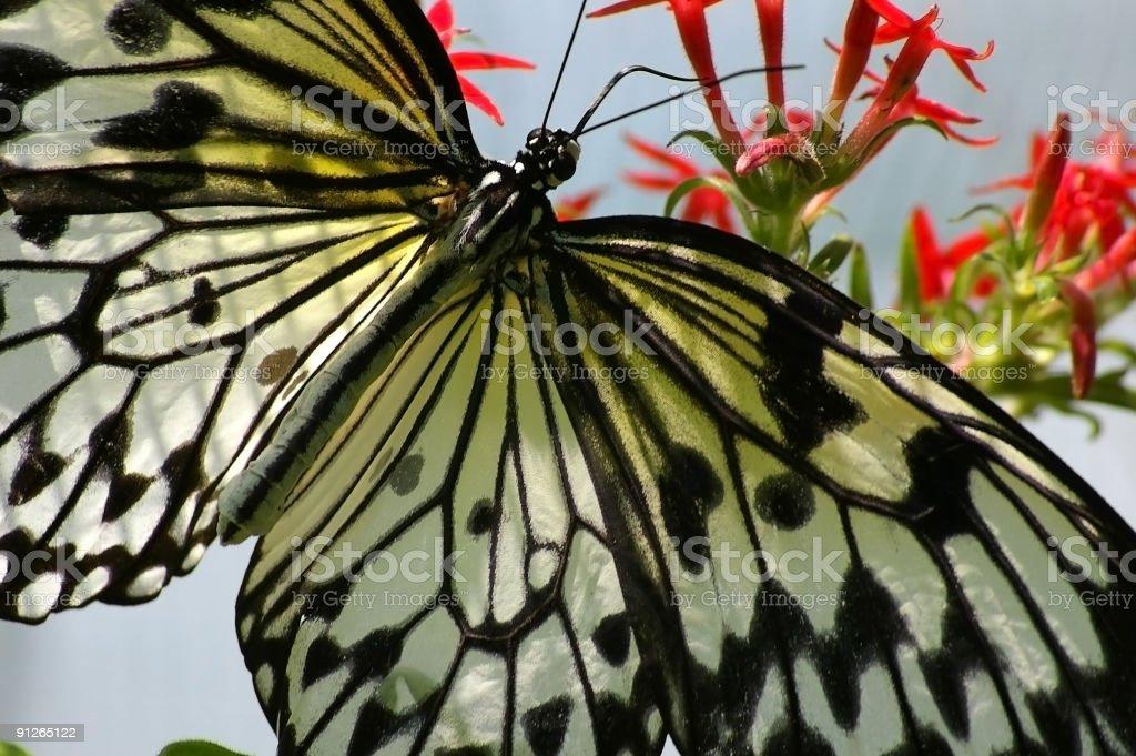 Schmetterling 4 Lizenzfreies stock-foto