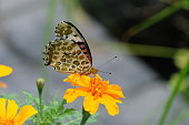 butterfly alighted on flower