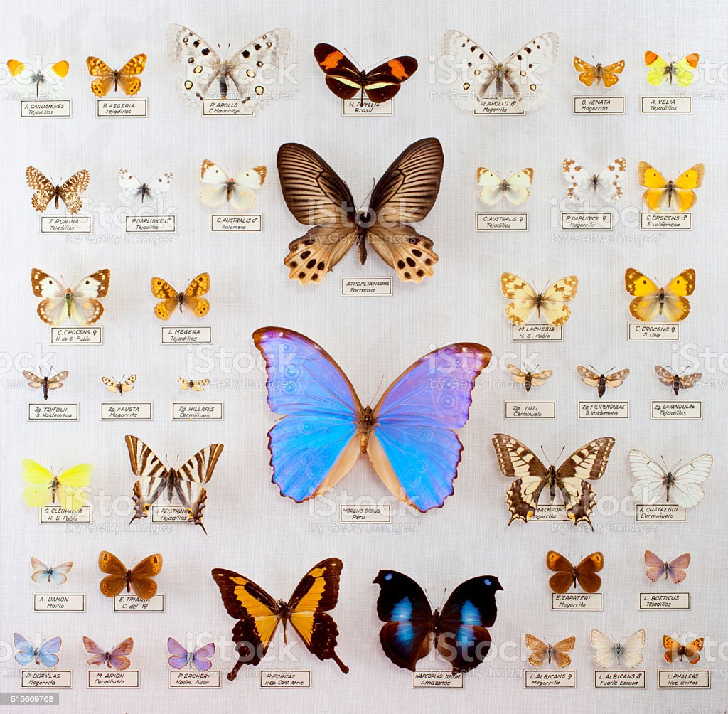 Butterfly amateur collection stock photo