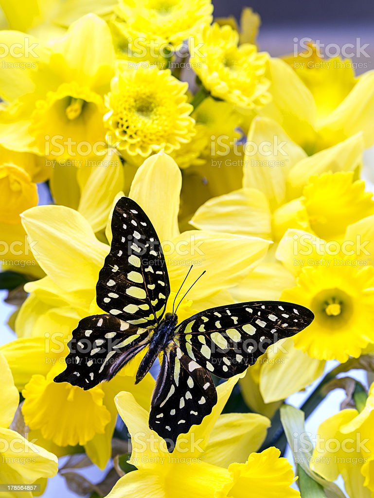 Butterfly among yellow flowers stock photo