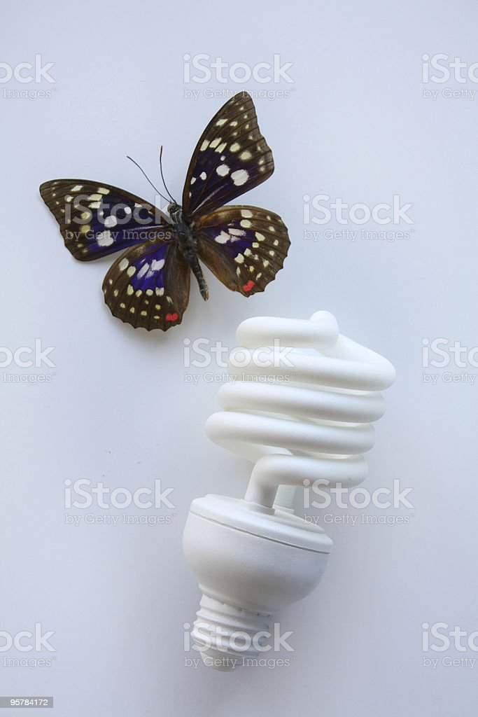 Butterfly and Compact Fluorescent Bulb stock photo