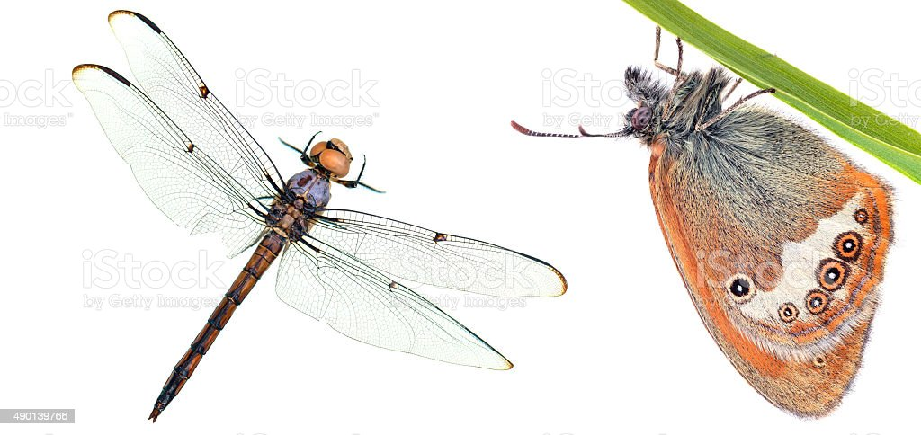Butterfly and dragonfly close-up macro stock photo