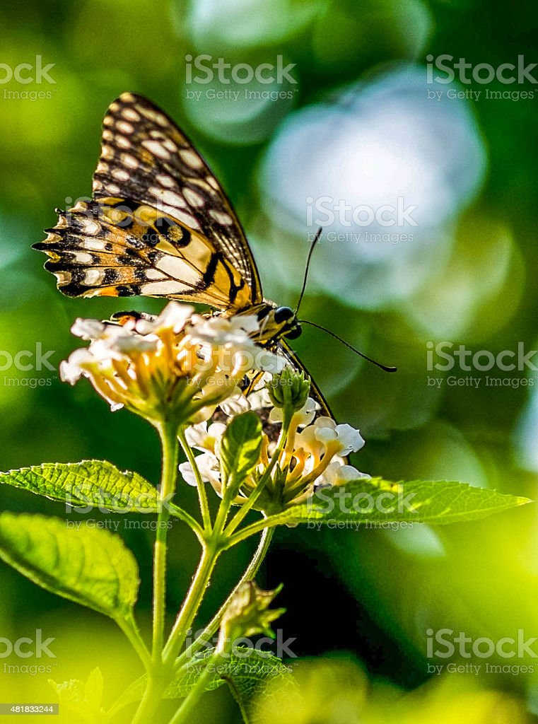 butterfly and flower in spring stock photo