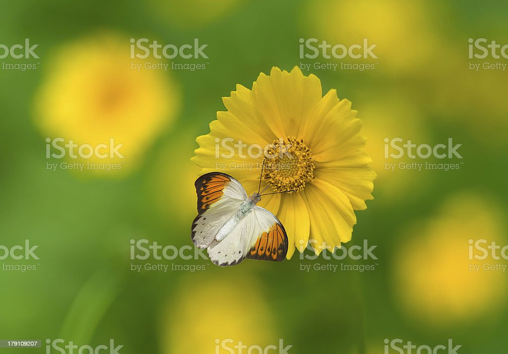 Butterfly and flower royalty-free stock photo