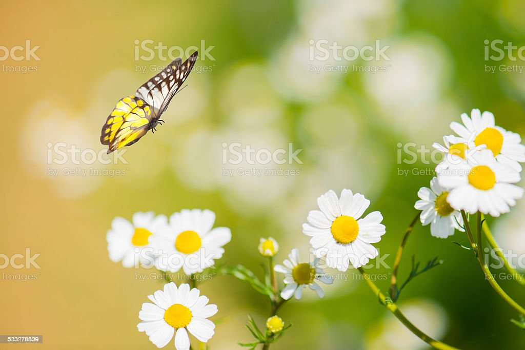 Butterfly and flower stock photo