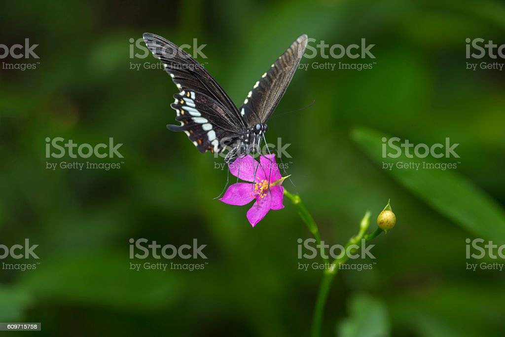 Papillon et fleurs photo libre de droits