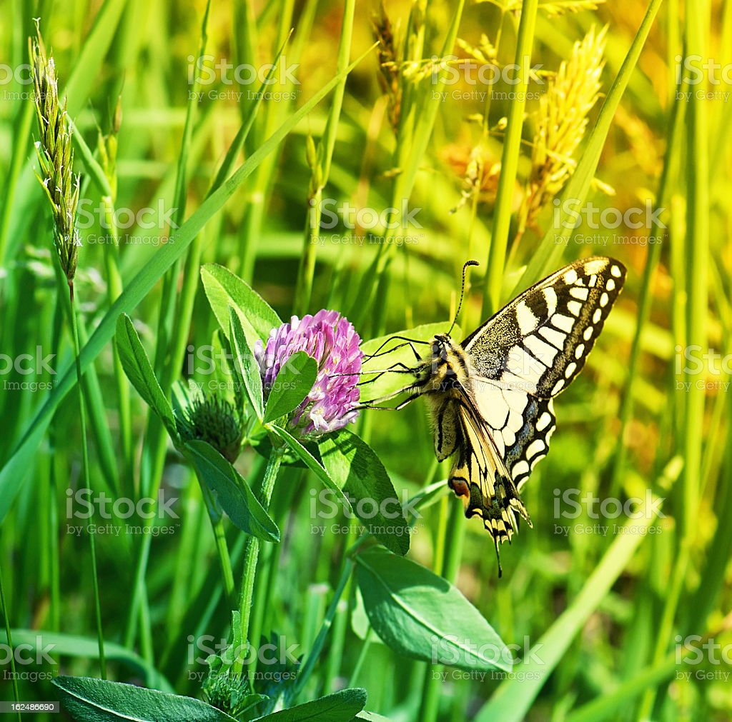 butterfly and grass stock photo