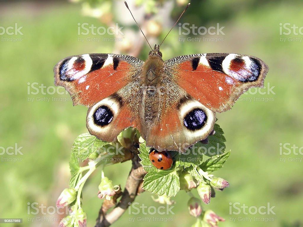 Motyl i miejscowości zbiór zdjęć royalty-free