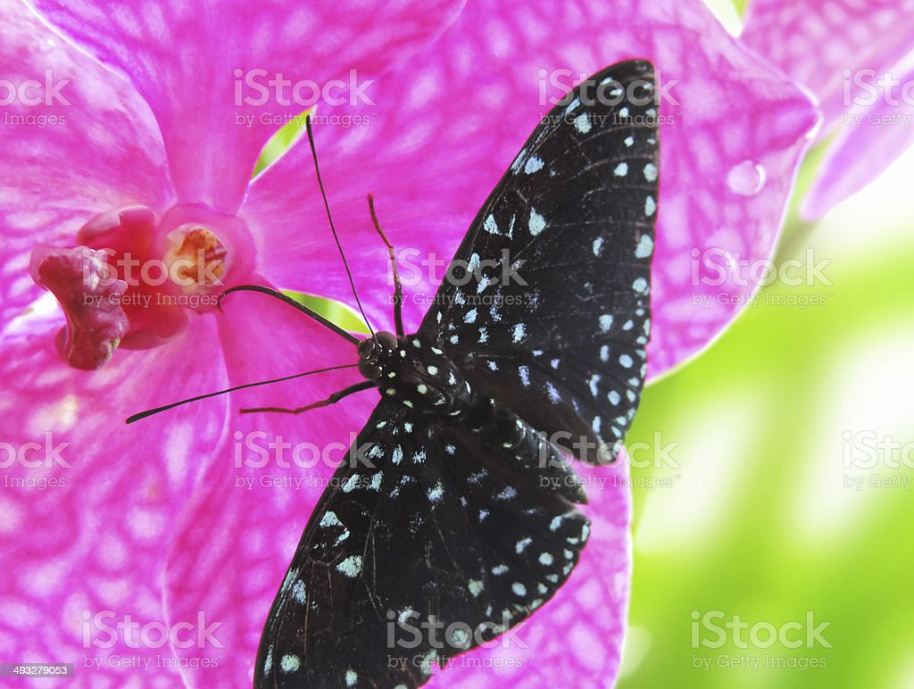 Butterfly and orchid stock photo