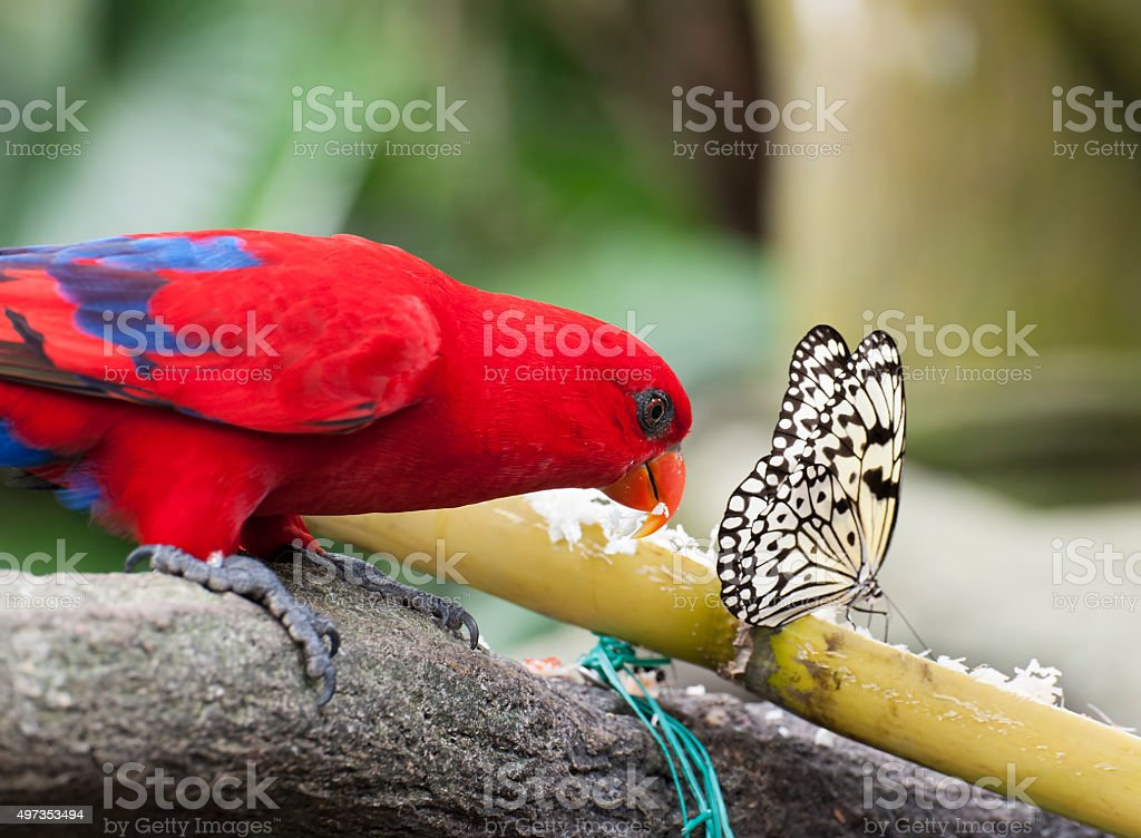 Butterfly and Parrot stock photo