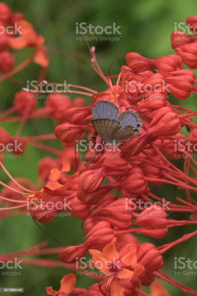 Butterfly and red flowers stock photo