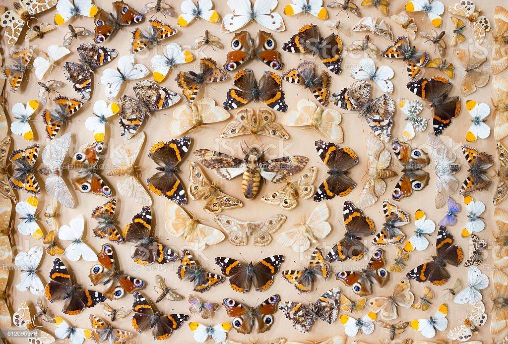 Butterfly art work stock photo