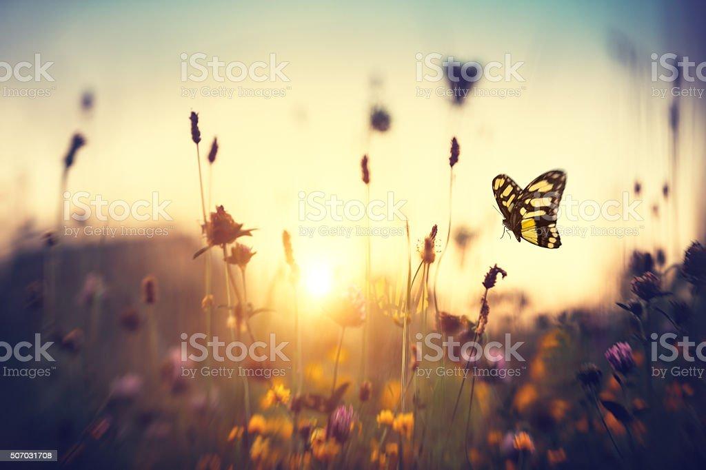 Schmetterling bei Sonnenuntergang – Foto