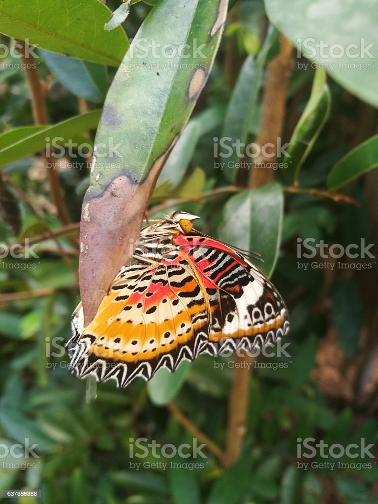 Butterfly at The Banteay Srey Butterfly Centre, Siem Reap, Cambodia stock photo
