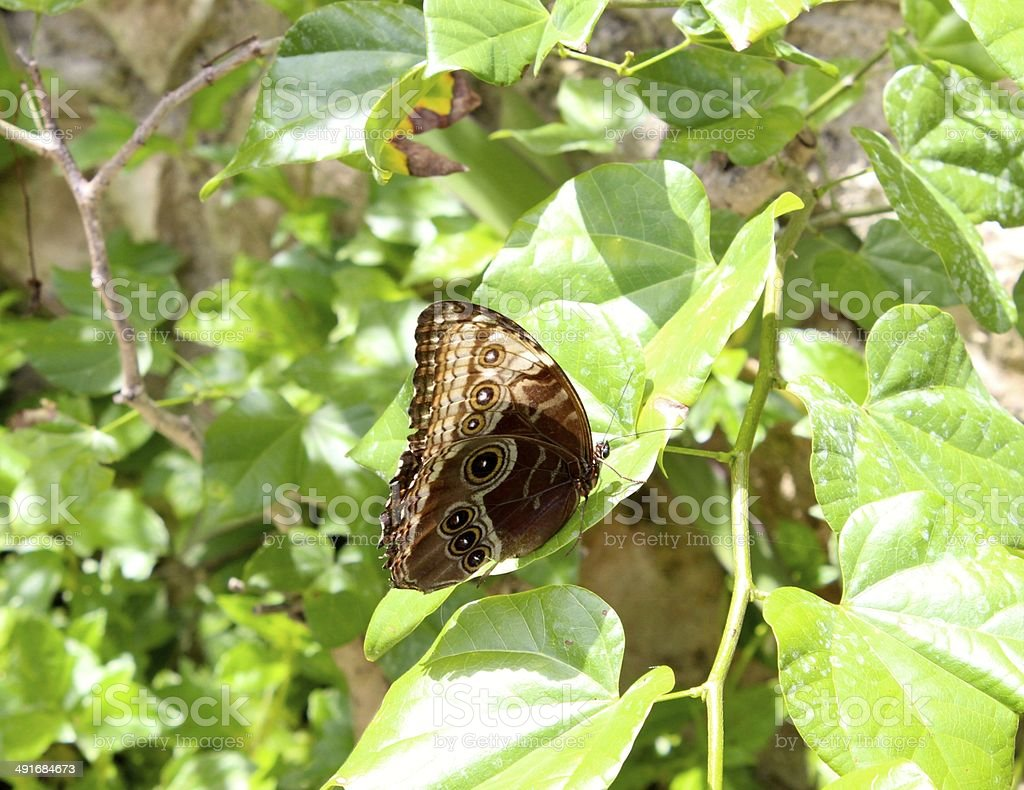 Butterfly at Xcaret Park, Mexico's sacred paradise royalty-free stock photo