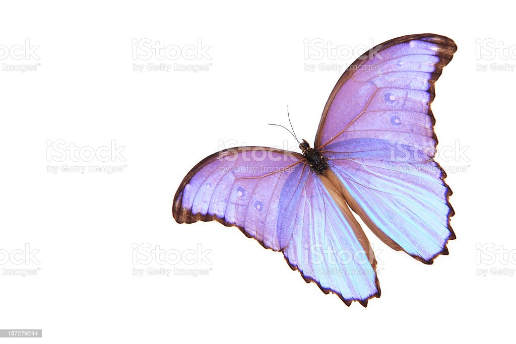 Butterfly beauty royalty-free stock photo