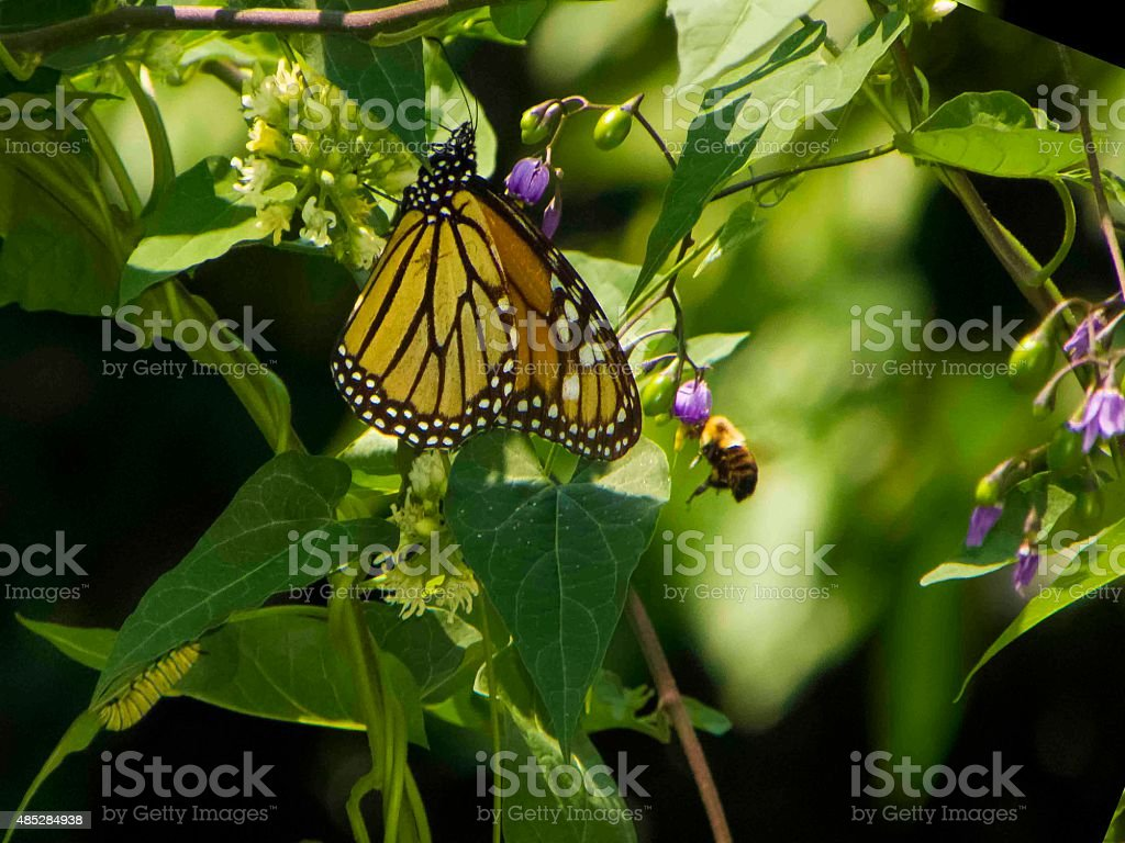 Butterfly, catterpillar, and honey bee stock photo