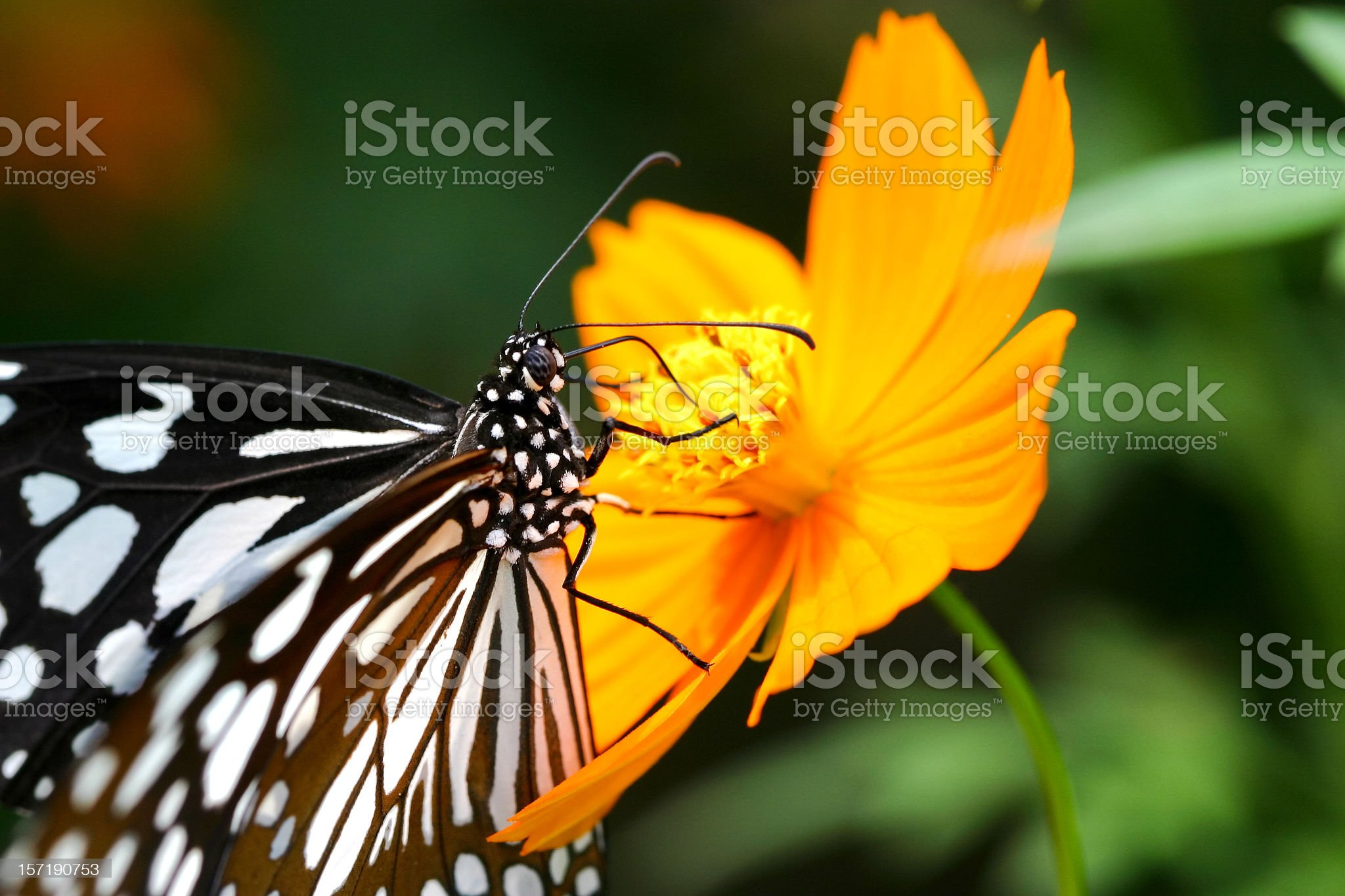 Butterfly closer royalty-free stock photo