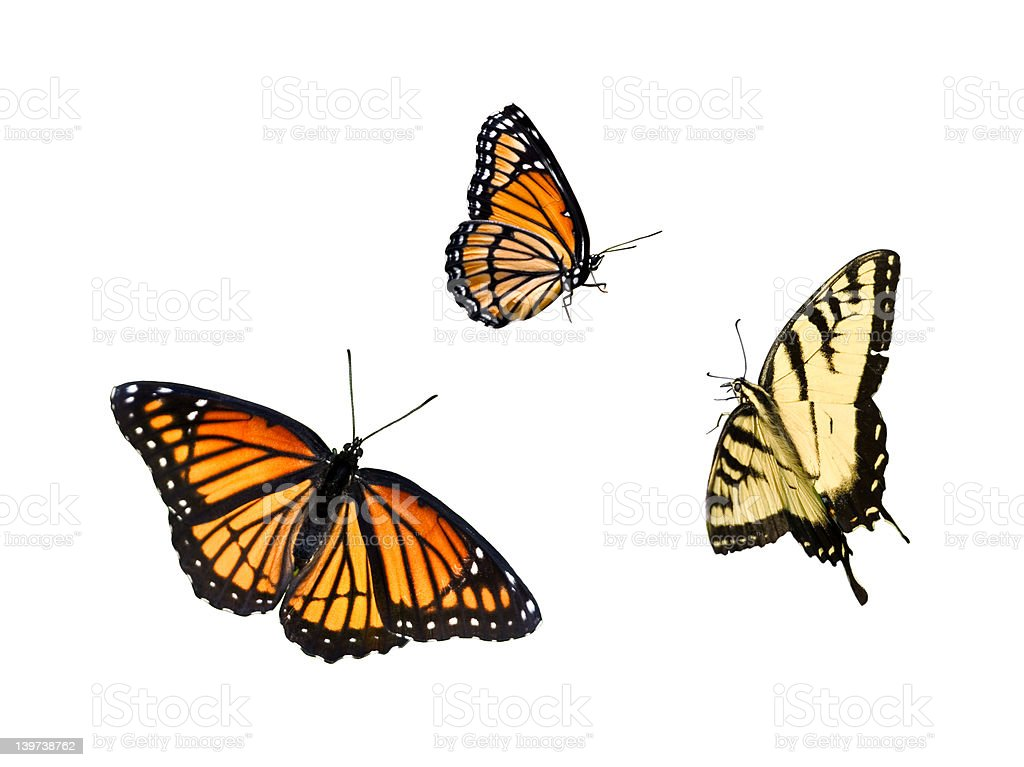 Butterfly collection 3 for 1 royalty-free stock photo