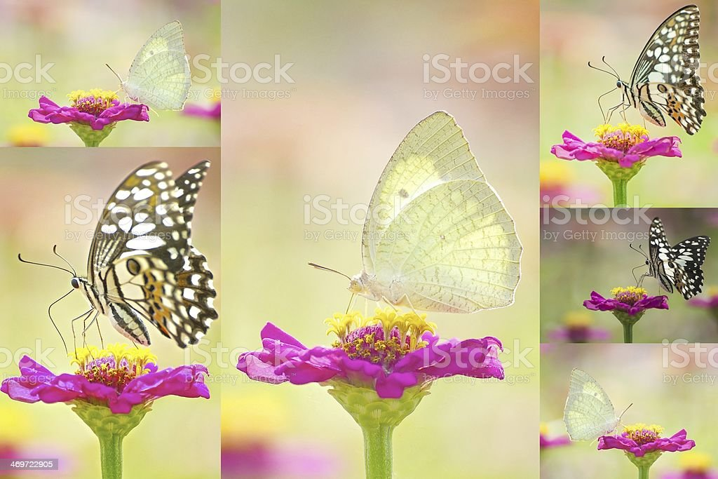 Butterfly collections stock photo