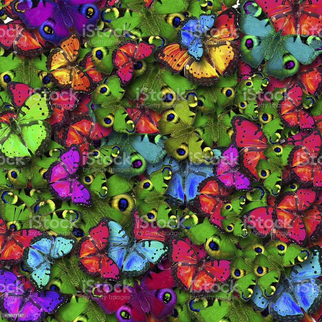 Butterfly color stock photo