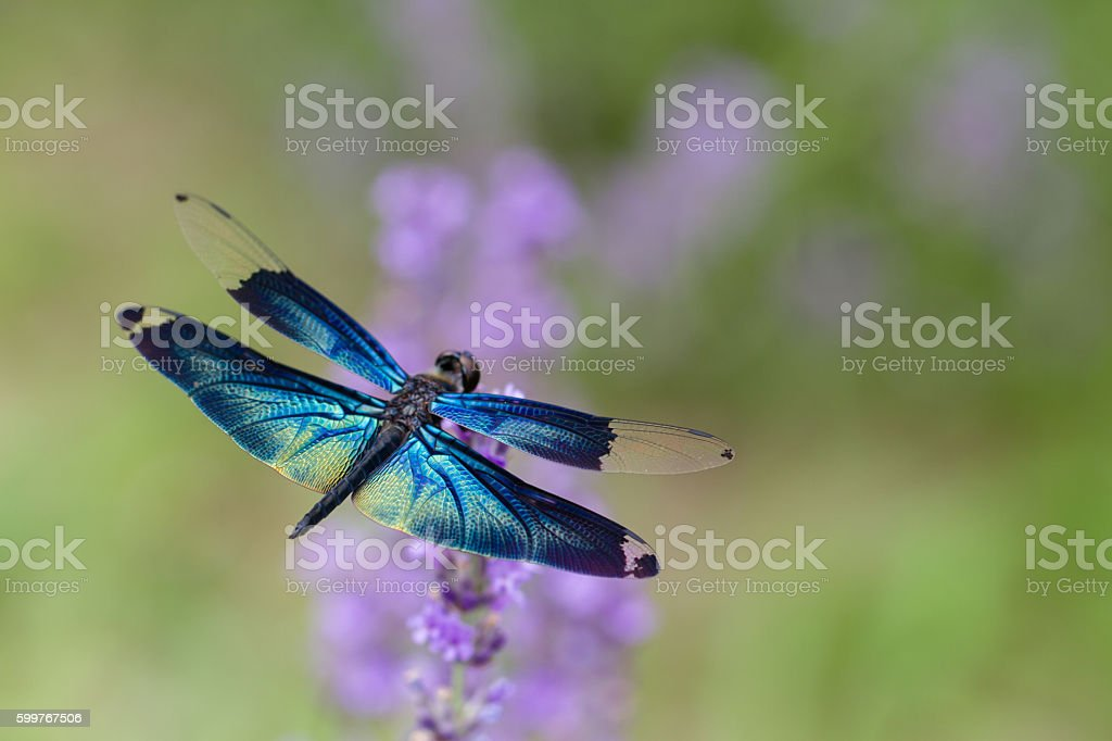 Butterfly dragonfly stock photo