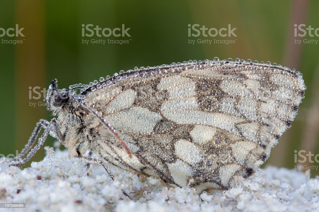 Butterfly early in the morning royalty-free stock photo