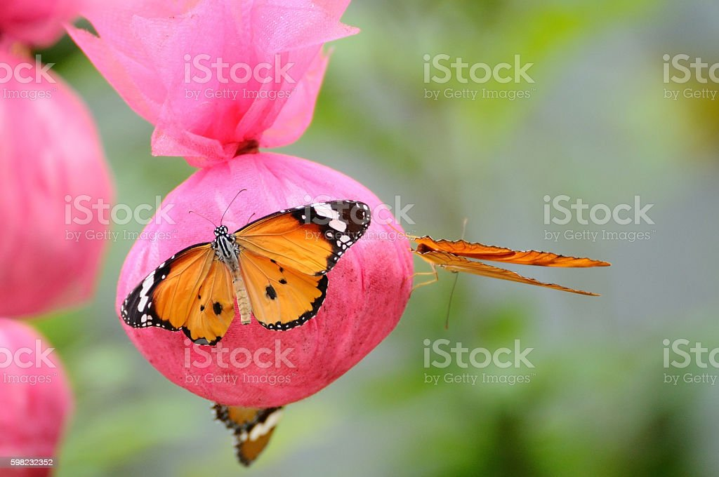 Butterfly eat food that made from human in garden stock photo