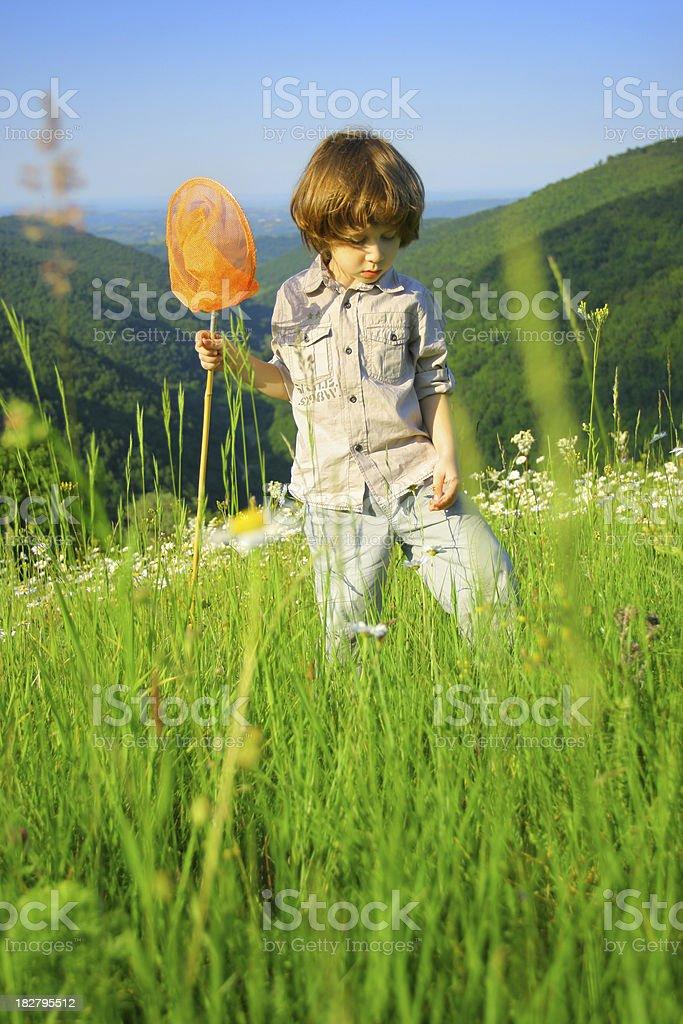 Butterfly explorer stock photo