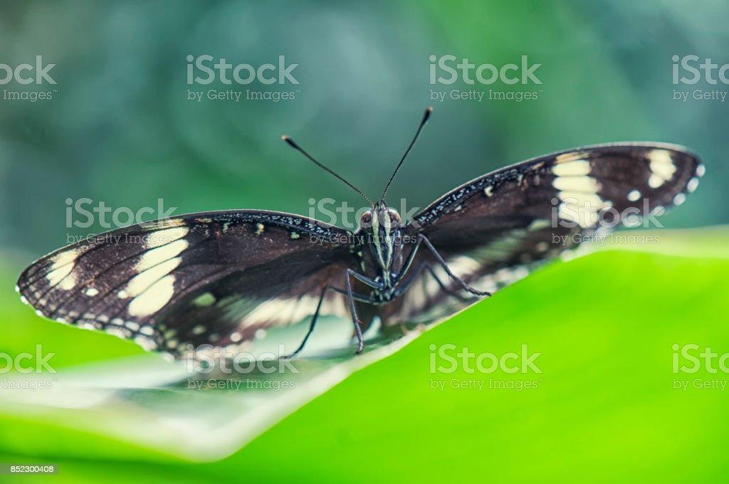 Butterfly eyes macro detail stock photo