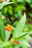 Butterfly feeding on green leaves in the garden