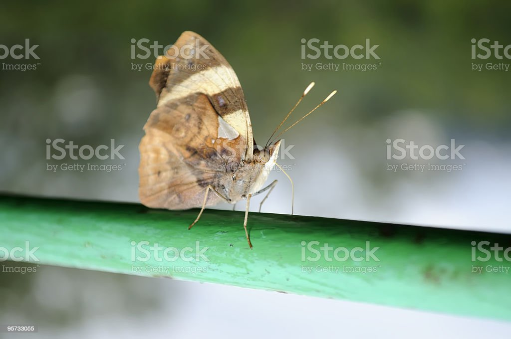 Butterfly Feeding On Paint stock photo