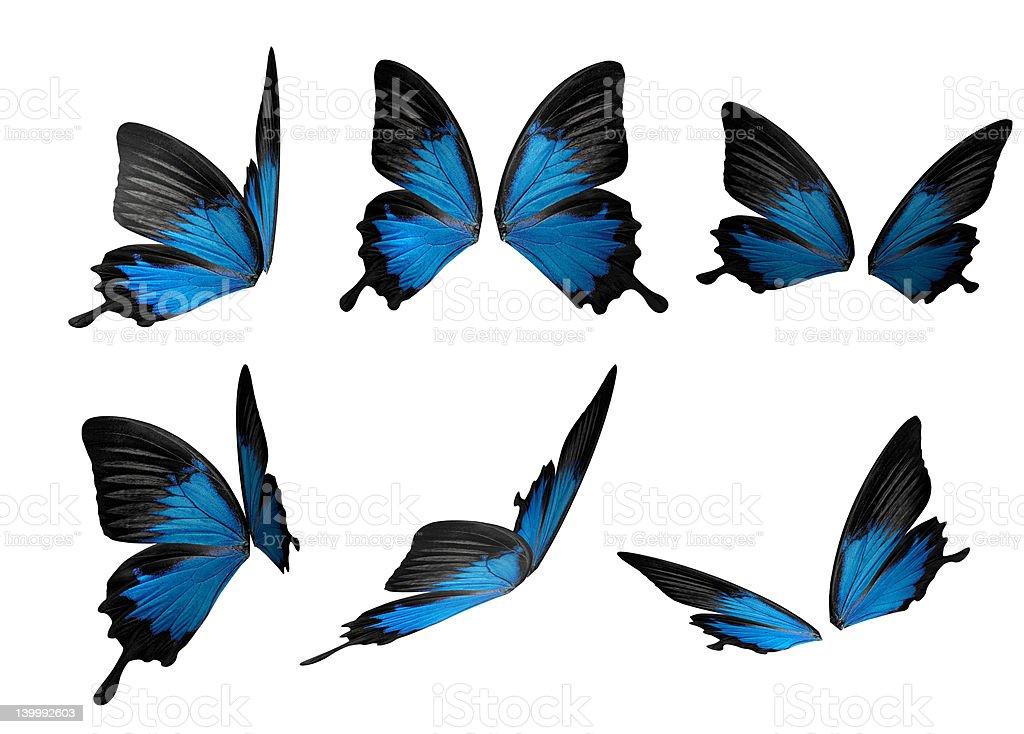 Butterfly flight royalty-free stock photo