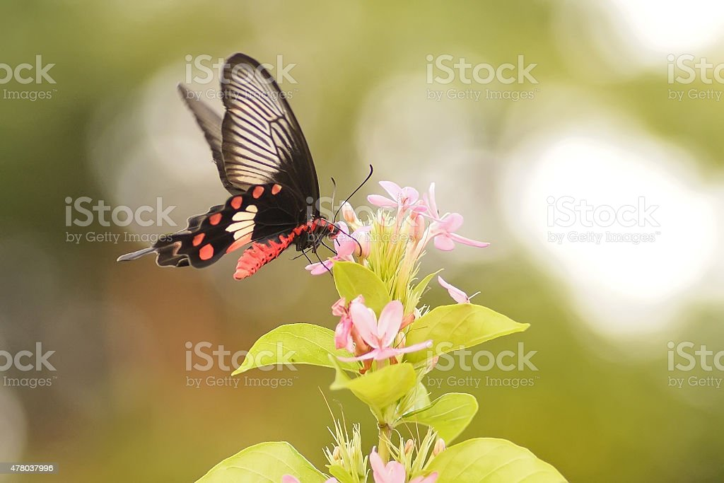butterfly flowers stock photo