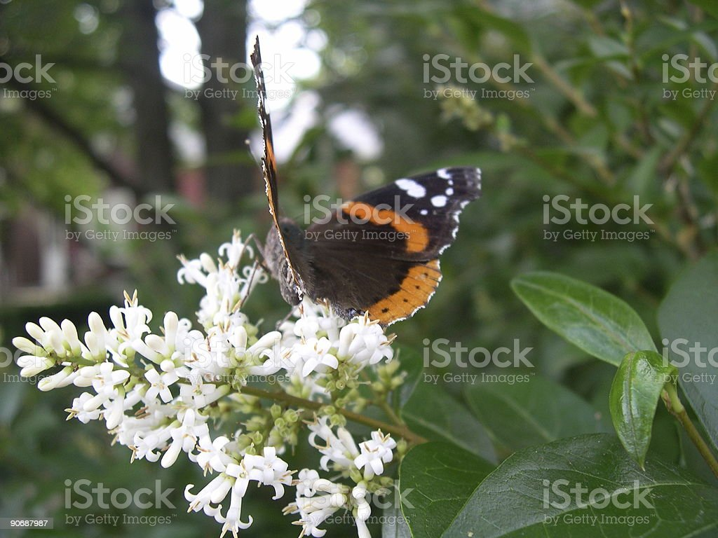 Butterfly & Flowers royalty-free stock photo