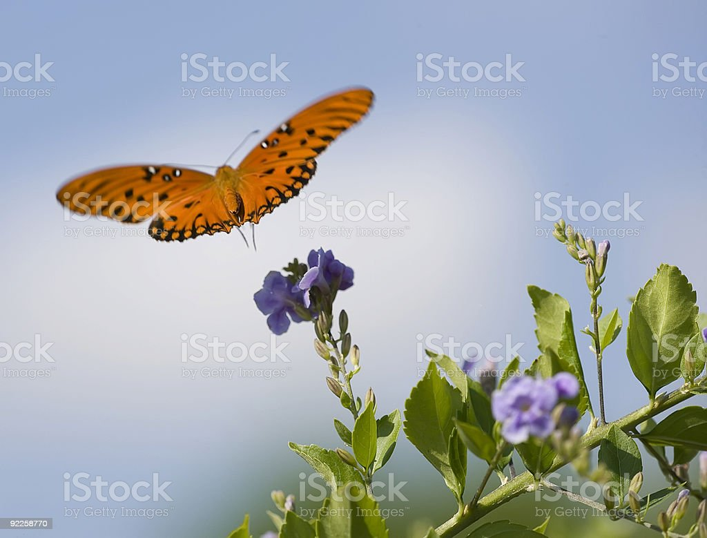Butterfly flying away from a flower. stock photo