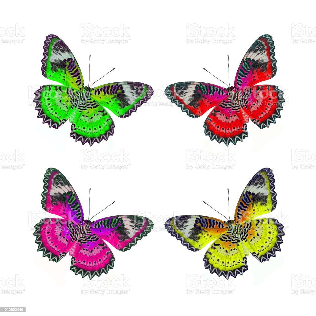Papillon volant photo libre de droits