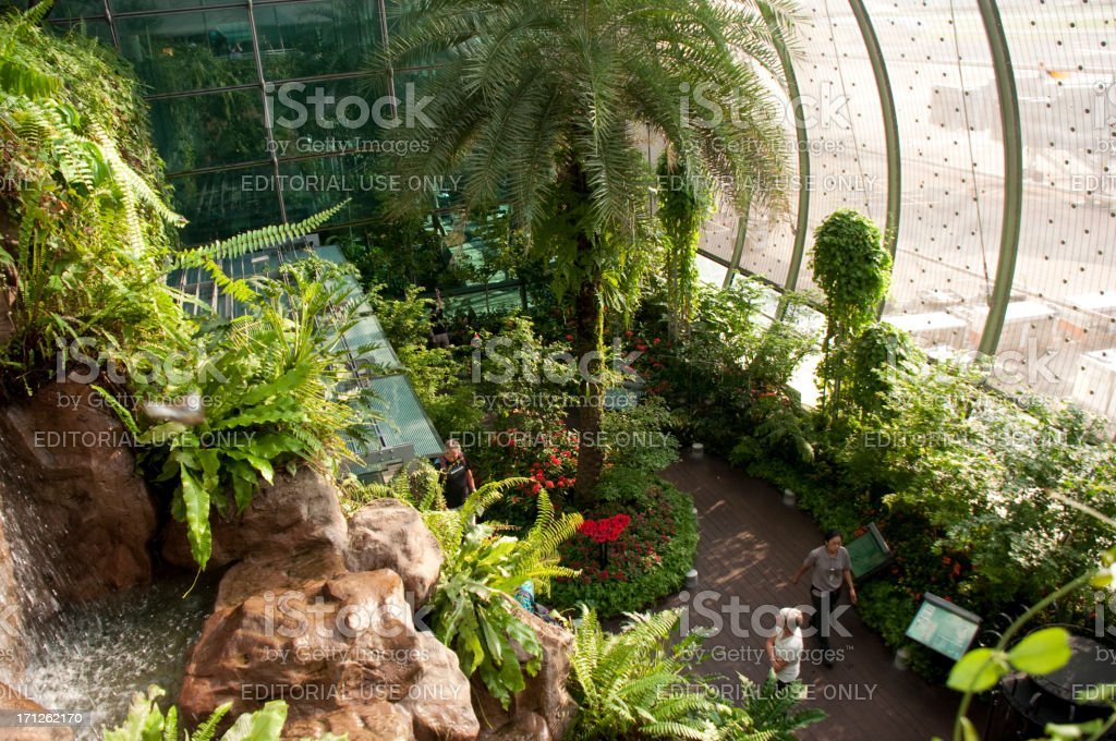 Butterfly Garden of Singapore Changi Airport stock photo