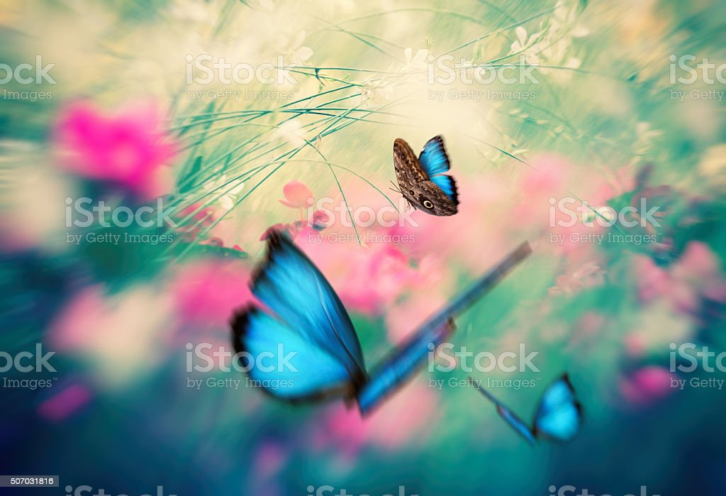 Summer meadow with blue morpho butterflies.