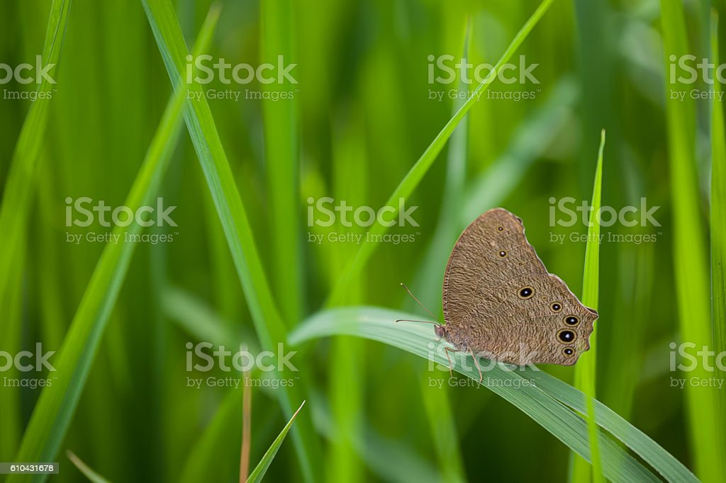 butterfly green farm field stock photo
