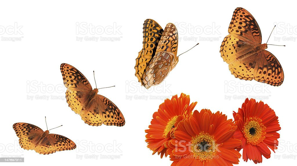 Butterfly Group with Paths stock photo