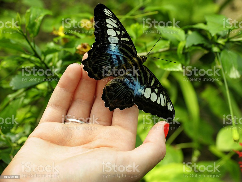 Butterfly hand royalty-free stock photo