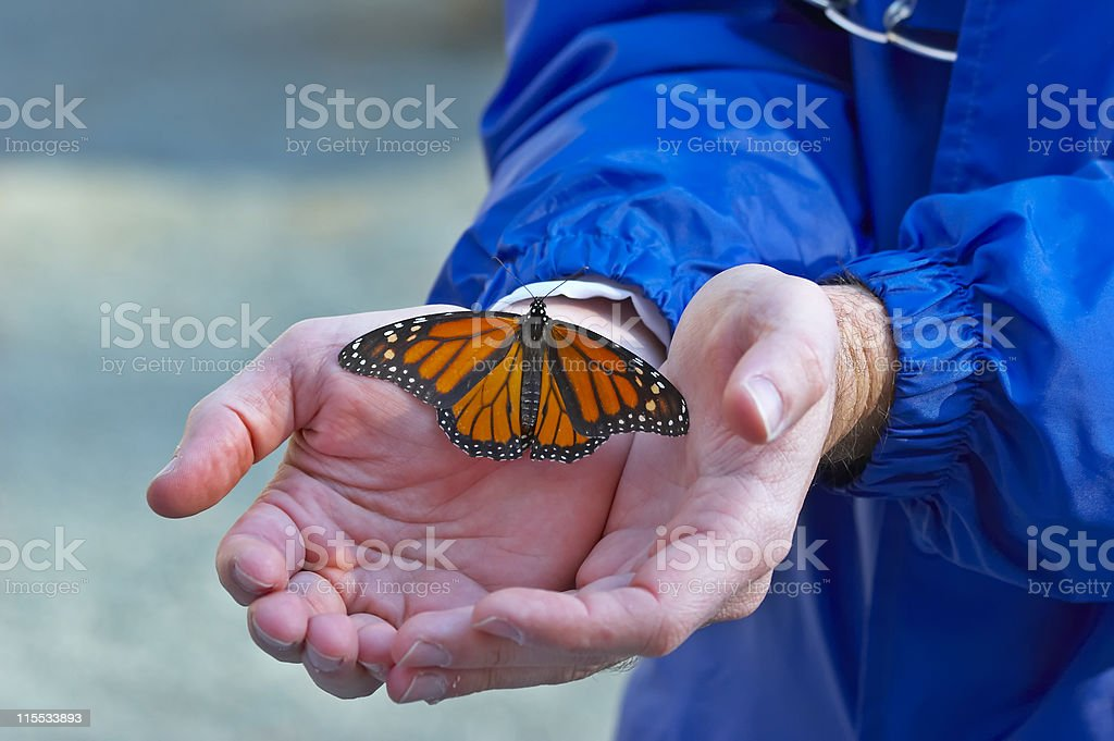 Butterfly Hands royalty-free stock photo