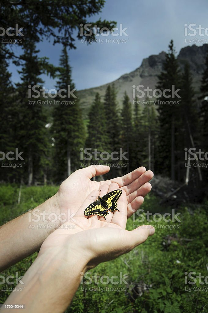 Butterfly held by two hand royalty-free stock photo