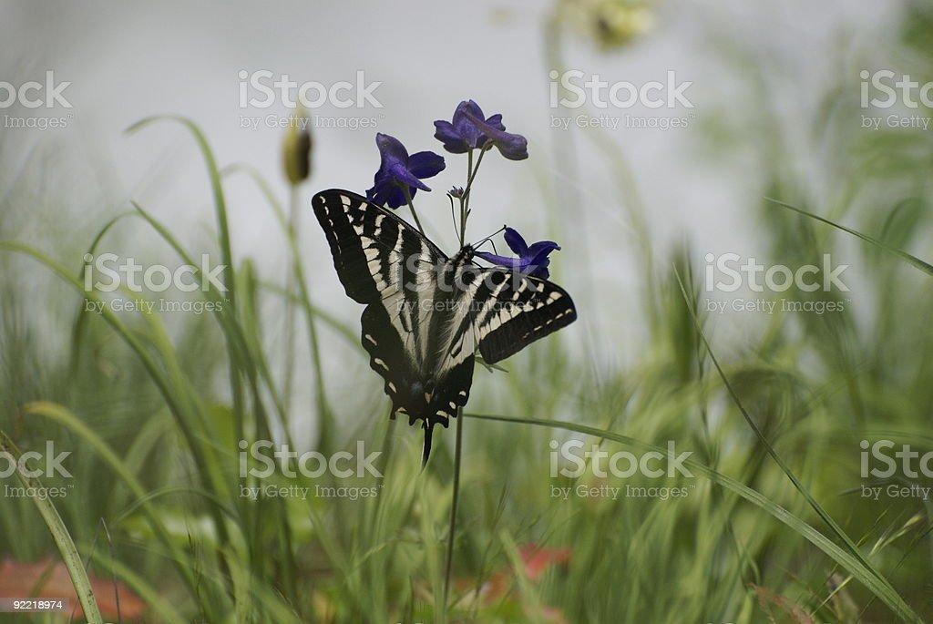 Butterfly in a field of flowers stock photo