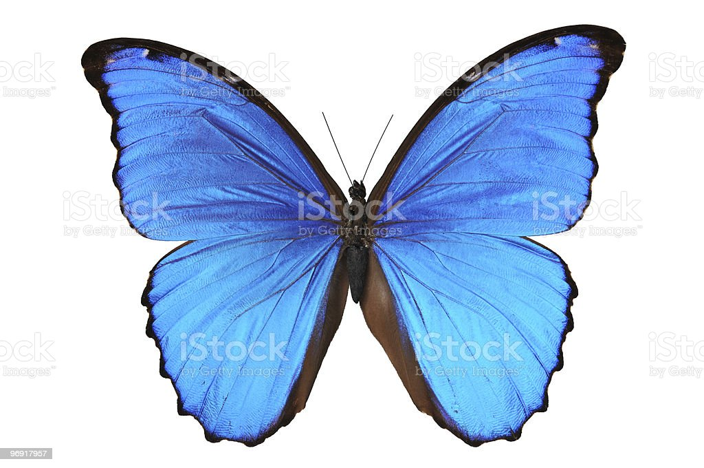 Butterfly in blue tones stock photo