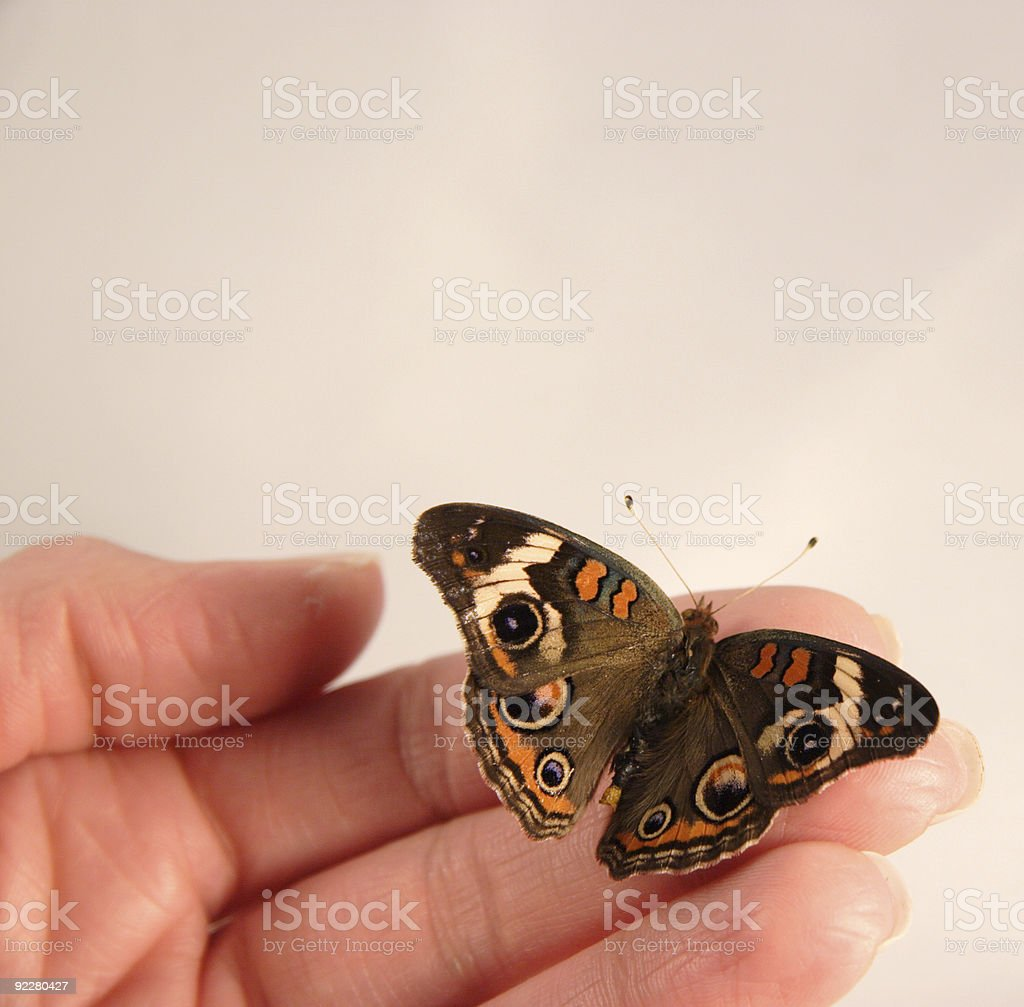 butterfly in color royalty-free stock photo